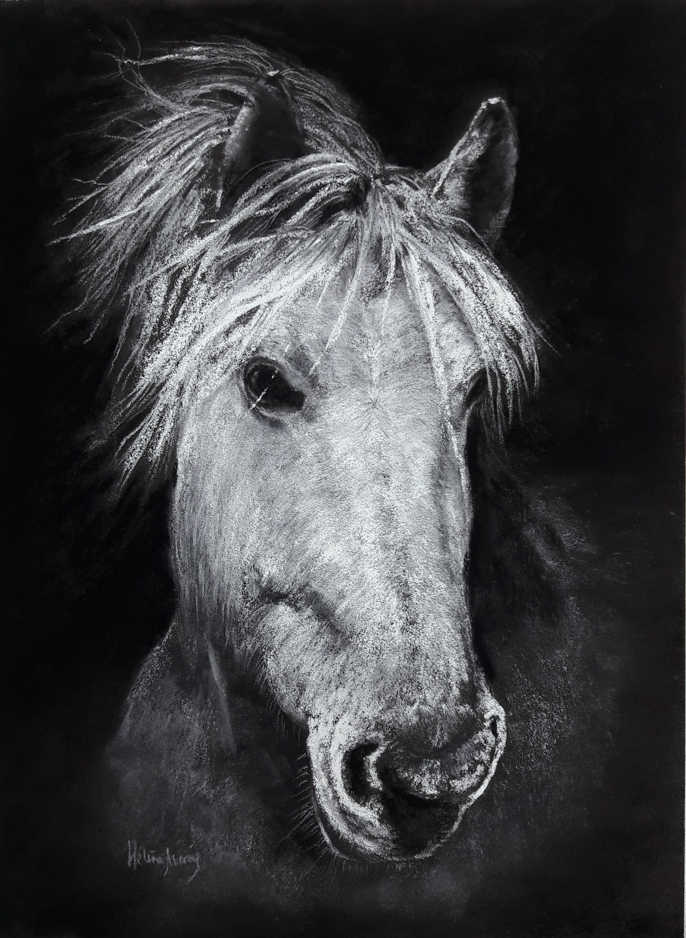 White Horse Portrait Helene Averous